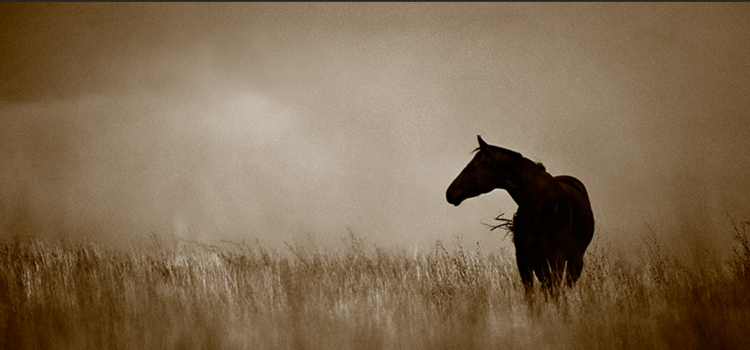 Shane Knight Photography