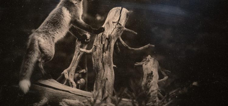 Jake Davis – Revealed in Nature